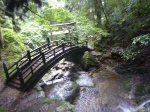 森林療法270707 (3)