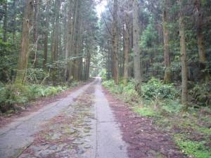 森林療法6月 (6)