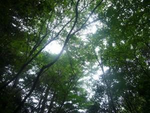 森林療法6月 (4)