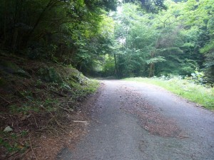 森林療法6月 (2)
