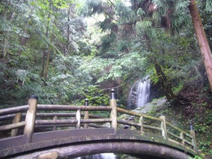 森林療法270707 (1)