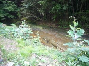 森林療法6月 (3)