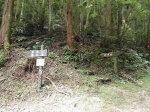 森林療法2707 (1)