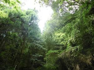 森林療法2707 (4)