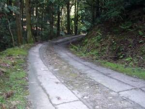 森林療法270818 (3)