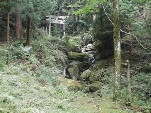 森林療法2707 (2)